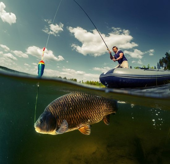 4 Steps to Know When to Fish or Cut Bait on a Stock